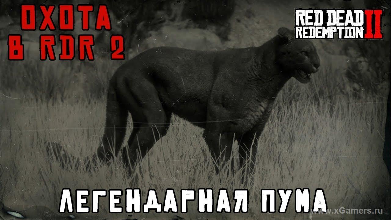 Легендарная пума в игре Red dead redemption 2