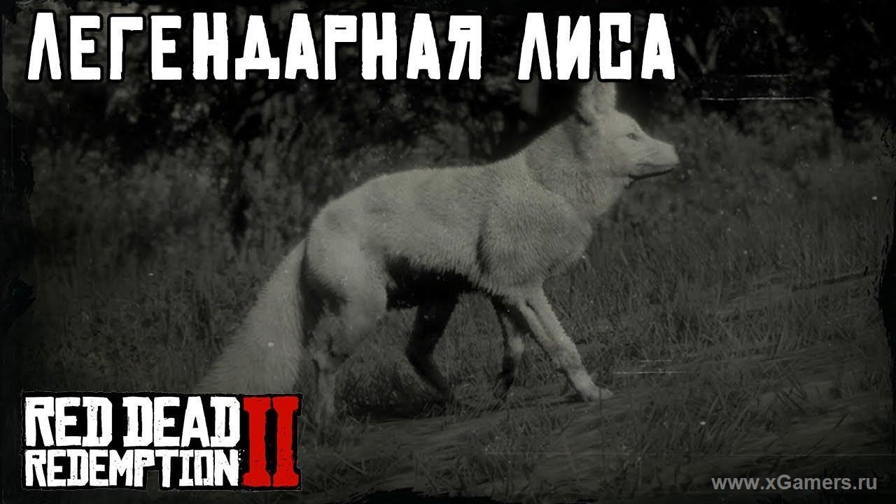 Легендарная лиса в игре Red dead redemption 2