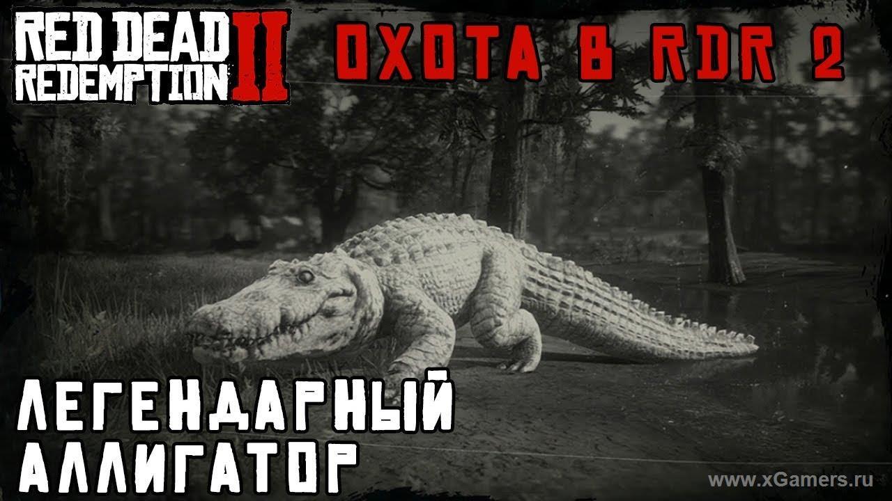 Легендарный аллигатор -альбинос в игре Red dead redemption 2