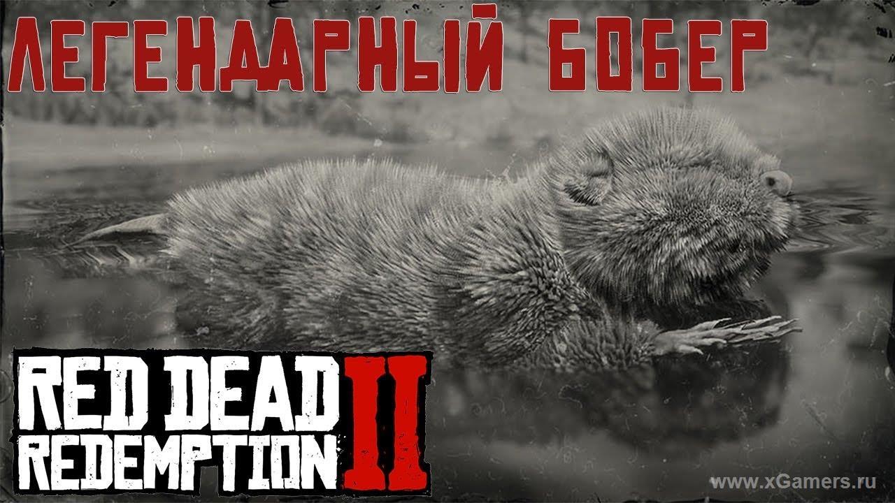 Легендарный бобер в игре Red dead redemption 2