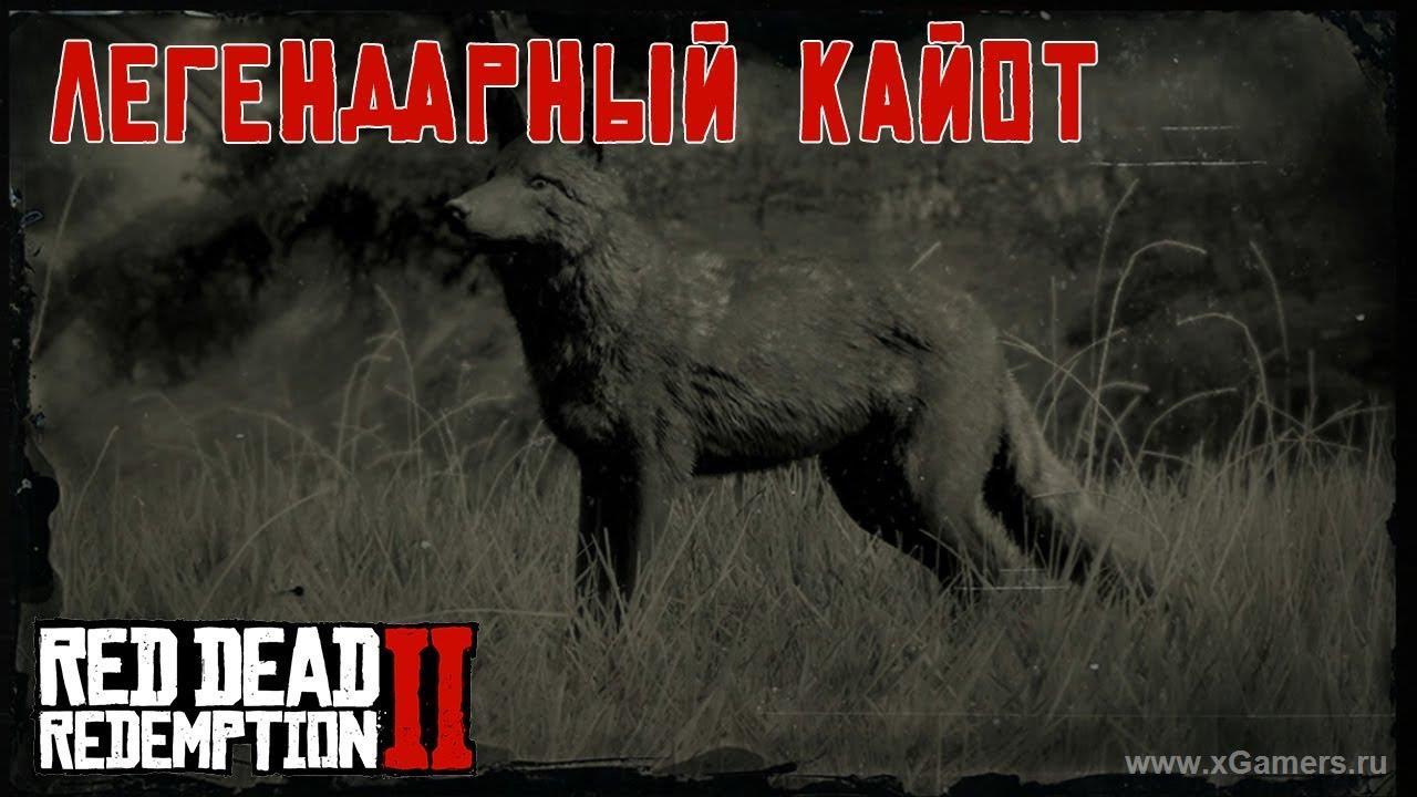 Легендарный койот в игре Red dead redemption 2