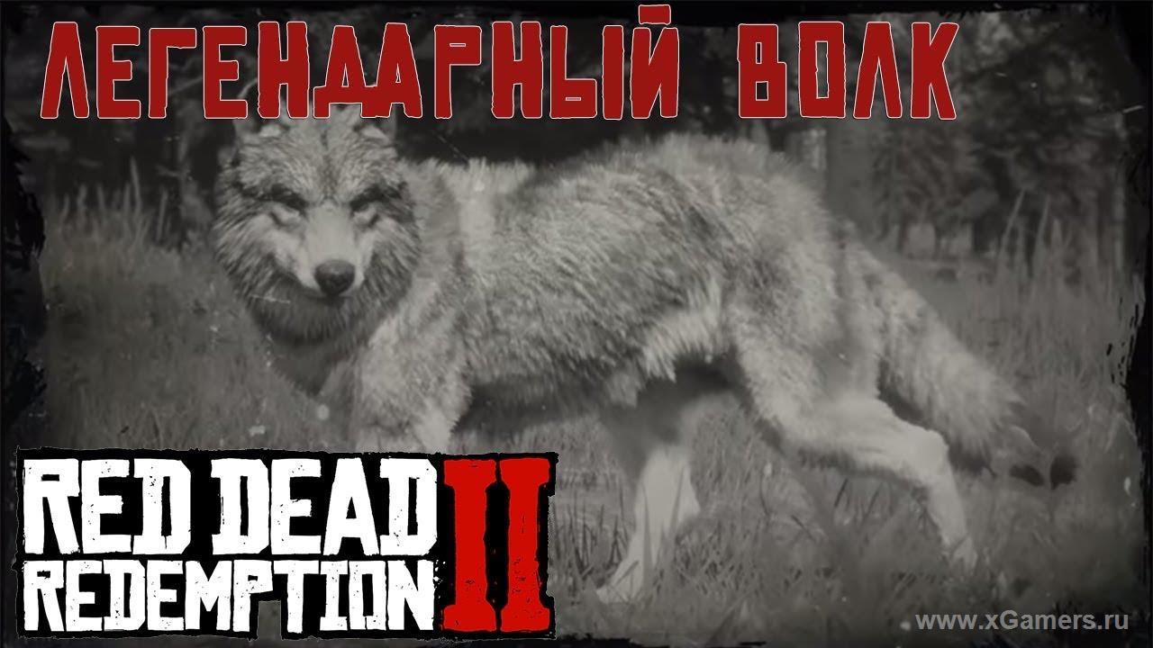Легендарный волк в игре Red dead redemption 2